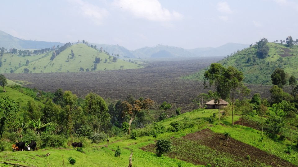 Nur noch verbrannte Erde – ein abgefackelter Tropenwald.